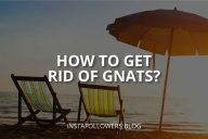 How to Get Rid of Gnats? (9 Different Ways)